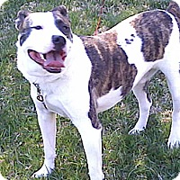 Adopt A Pet :: Bender - Chilhowie, VA