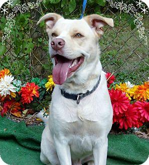 Retriever (Unknown Type) Mix Dog for adoption in Marietta, Georgia - BYRON (R)