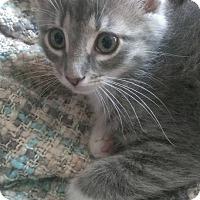 Adopt A Pet :: Kitty - Port Republic, MD