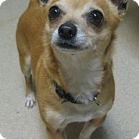 Adopt A Pet :: Rex - Gary, IN