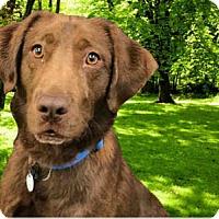 Adopt A Pet :: Bay - Rockville, MD