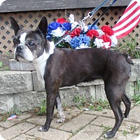 Adopt A Pet :: Niecey - West Chicago, IL