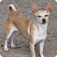 Adopt A Pet :: Millicent - Santa Fe, TX