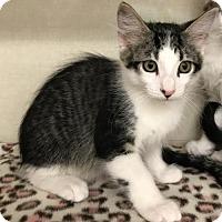 Adopt A Pet :: Toby - Walnut Creek, CA