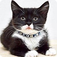 Adopt A Pet :: Betsy - Dublin, CA