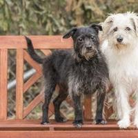 Adopt A Pet :: Montgomery - Waco, TX