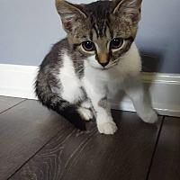 Adopt A Pet :: Pam - Lexington, KY