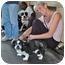 Photo 4 - Shih Tzu Dog for adoption in Freeport, New York - Chancellor