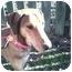 Photo 3 - Vizsla/Collie Mix Dog for adoption in Powell, Ohio - Oliver