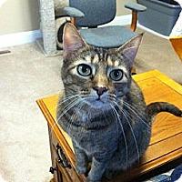 Adopt A Pet :: Nina - Fredericksburg, VA