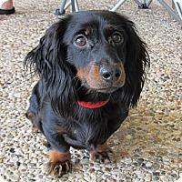 Adopt A Pet :: Mister - Kingwood, TX