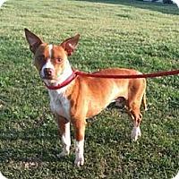 Adopt A Pet :: Guava Jelly - Southampton, PA
