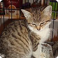 Adopt A Pet :: Pistachio - Brooklyn, NY