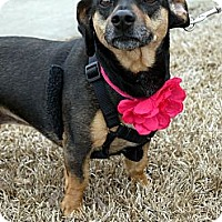 Adopt A Pet :: Wendy - Baton Rouge, LA