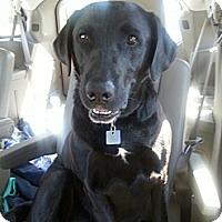 Adopt A Pet :: Karma - Cumming, GA