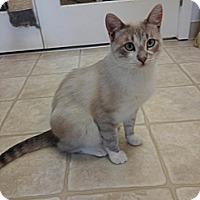 Adopt A Pet :: Dusty - Cloquet, MN
