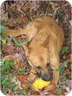 Shepherd (Unknown Type)/Spitz (Unknown Type, Medium) Mix Dog for adoption in Pittsboro/Durham, North Carolina - Jampa = Love