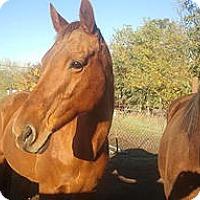 Thoroughbred Mix for adoption in Elk Grove, California - Etta