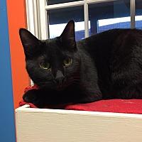 Adopt A Pet :: Rooney - Topeka, KS