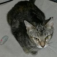 Adopt A Pet :: Malika - oakland park, FL