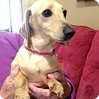 Adopt A Pet :: Sandy - Georgetown, KY
