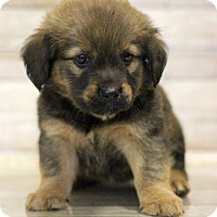 Adopt A Pet :: Koffing - Waldorf, MD