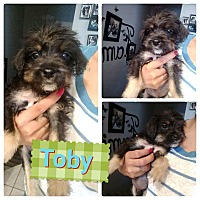 Adopt A Pet :: Toby - LAKEWOOD, CA