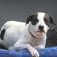Adopt A Pet :: Patti - Alpharetta, GA