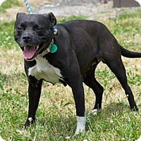 Adopt A Pet :: Mama - Troy, MI