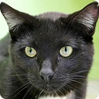 Adopt A Pet :: Herbert - Reduced Fee! - Jefferson, WI