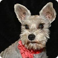 Adopt A Pet :: Tori - Abilene, TX
