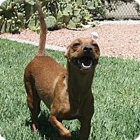Adopt A Pet :: Clementine - Henderson, NV