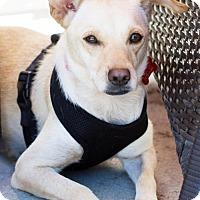 Adopt A Pet :: Kimberly - San Diego, CA