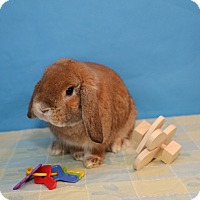 Adopt A Pet :: Charlie - Birmingham, AL