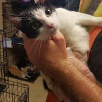 Adopt A Pet :: Megan - Russellville, KY