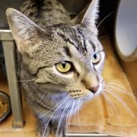 Adopt A Pet :: Valerie - Baraboo, WI