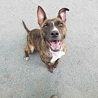 Adopt A Pet :: KIMMIE - Atlanta, GA
