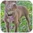 Photo 1 - Labrador Retriever/Terrier (Unknown Type, Medium) Mix Puppy for adoption in Mt. Prospect, Illinois - Taffy