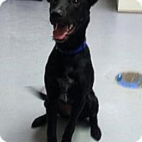 Adopt A Pet :: Valkyrie - Fort Riley, KS
