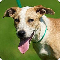 Adopt A Pet :: Crickett - Providence, RI