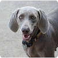 Adopt A Pet :: Romy - New Boston, NH