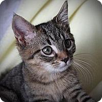 Adopt A Pet :: Agnus - Xenia, OH