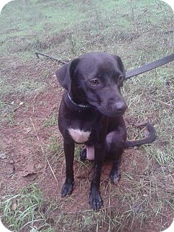 Terrier (Unknown Type, Small)/Labrador Retriever Mix Dog for adoption in Sacramento, California - Mandy perfect size