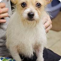 Adopt A Pet :: Layla - Bristol, TN