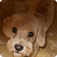 Adopt A Pet :: Sonny - dewey, AZ