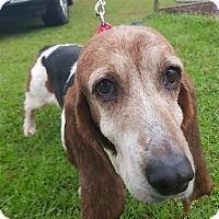Adopt A Pet :: Frieda - Northport, AL