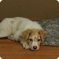 Adopt A Pet :: Kiwi -Adopted! - Croydon, NH