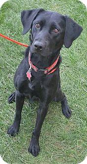 Labrador Retriever Mix Dog for adoption in Fruit Heights, Utah - Elsie
