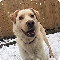 Adopt A Pet :: Whitney - Hamilton, ON