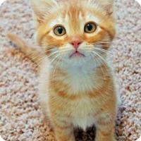 Adopt A Pet :: George Washington - Colorado Springs, CO